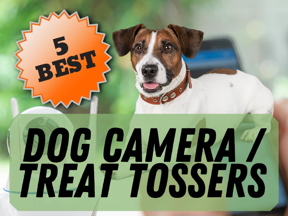 dog treat tosser featured
